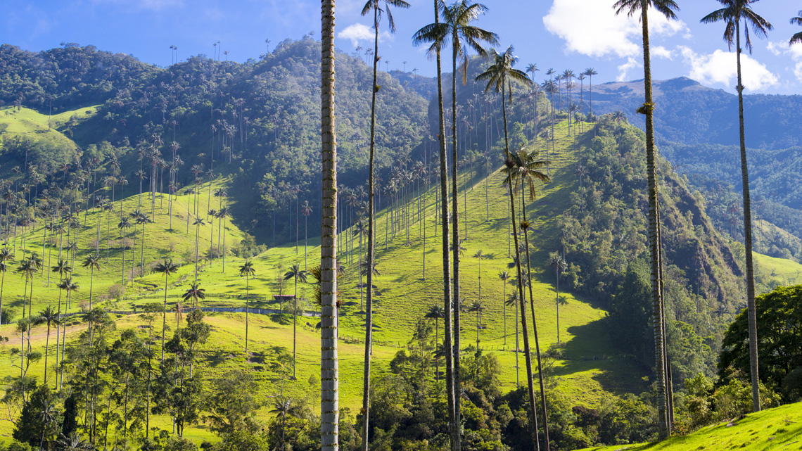 Koffiedriehoek Colombia