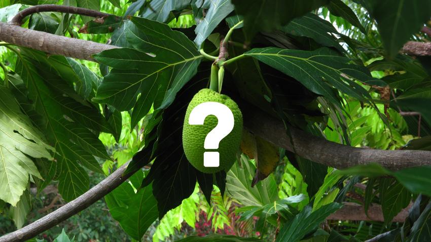 Vragen over Colombia