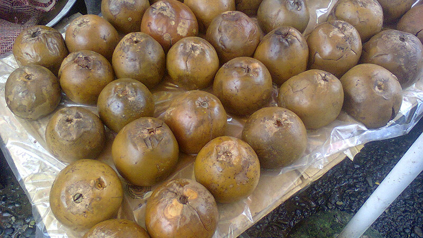 Borojó fruit