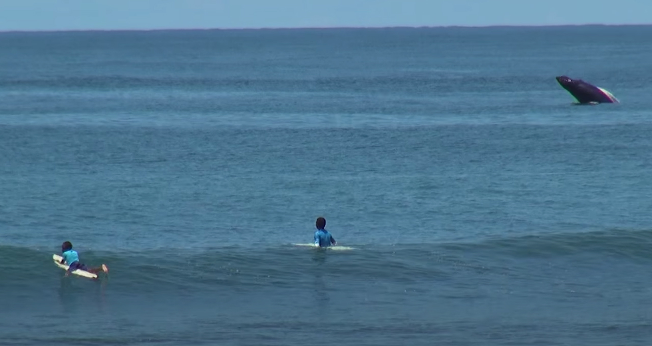 Surfers en walvis in Playa Guachalito
